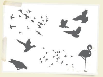 birds1.jpg
